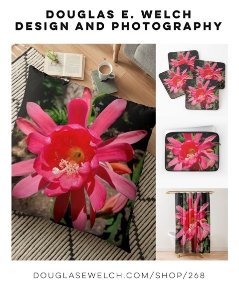 Shine Brightly With These Epiphyllum Flower Pillows, Cases, and More From Douglas E. Welch Design and Photography [For Sale]