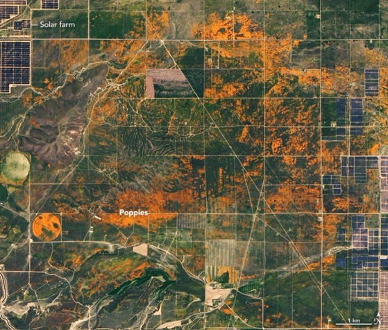 NASA Shows California Poppies in Bloom with Photo Captured from Space via My Modern Met