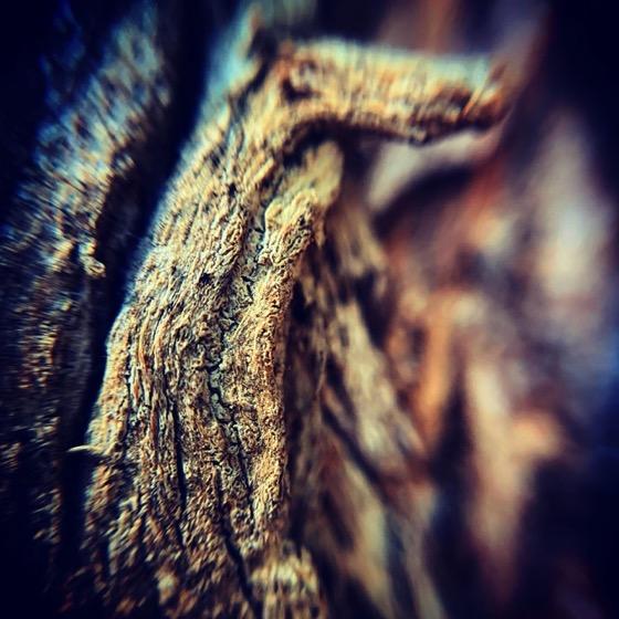 Eucalyptus Bark In Macro via Instagram