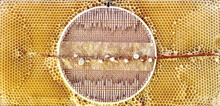 Bees Become Creative Collaborators by Helping Complete This Artist's Embroideries via My Modern Met